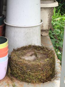巣立った後のシジュウカラの巣の写真