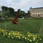 パリ植物園のジニアの写真