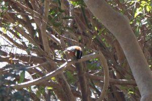 枝の上でひまわりの種の殻を割るヤマガラの写真