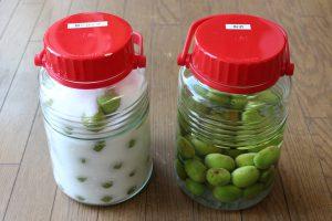 梅シロップと梅酒の写真