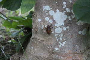 18:40 木を登るセミの幼虫の写真