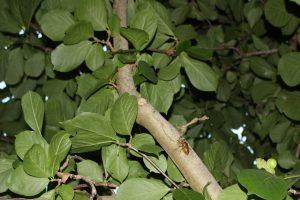 18:51 木を登り続けるセミの幼虫の写真