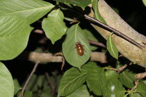 19:02 羽化の場所を決めたセミの幼虫の写真