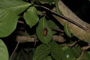 19:09 殻に亀裂が入り始めたセミの幼虫の写真