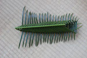 ソテツの虫かご 裏の写真