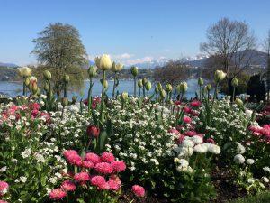 ペルル・デュ・ラック公園の真珠の庭から見たレマン湖とモンブラン (春)の写真