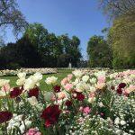 ペルル・デュ・ラック公園の真珠の庭(春)の写真