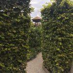 シデの生垣の写真