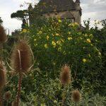 Le jardin du toucher(触覚の庭)の写真