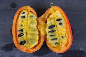 半分に切ったカラスウリの果実の写真