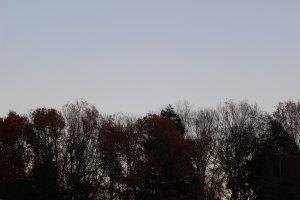 冬木立の写真
