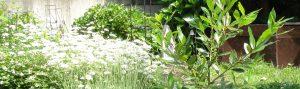 ホワイトガーデンの写真
