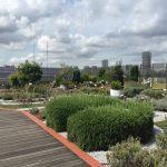 アカデミック臭漂う空中庭園!国立科学博物館屋上のハーブガーデン