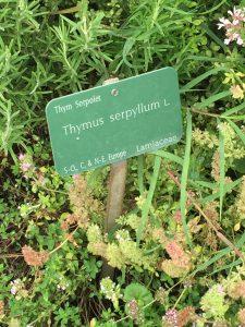 パリ植物園のプランツネームプレートの写真