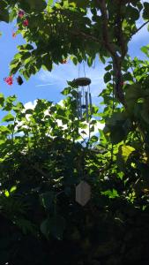 沖縄の竹富島の木に吊るしたウインドチャイムの写真