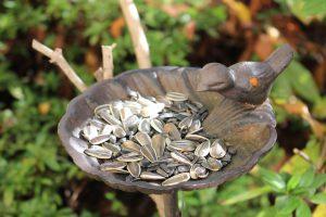バードフィーダーのひまわりの種の写真