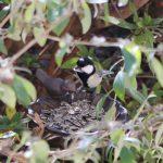 鳥の餌台を設置!ひまわりの種でヤマガラとシジュウカラを呼ぶ