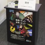 最近静岡県で増えているチョウについて。企画展「静岡のチョウ 世界のチョウ」