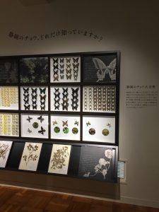 「静岡のチョウ 世界のチョウ」より、静岡県に生息するのアゲハチョウ科の写真
