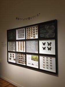 「静岡のチョウ 世界のチョウ」より、静岡で増えているチョウの写真
