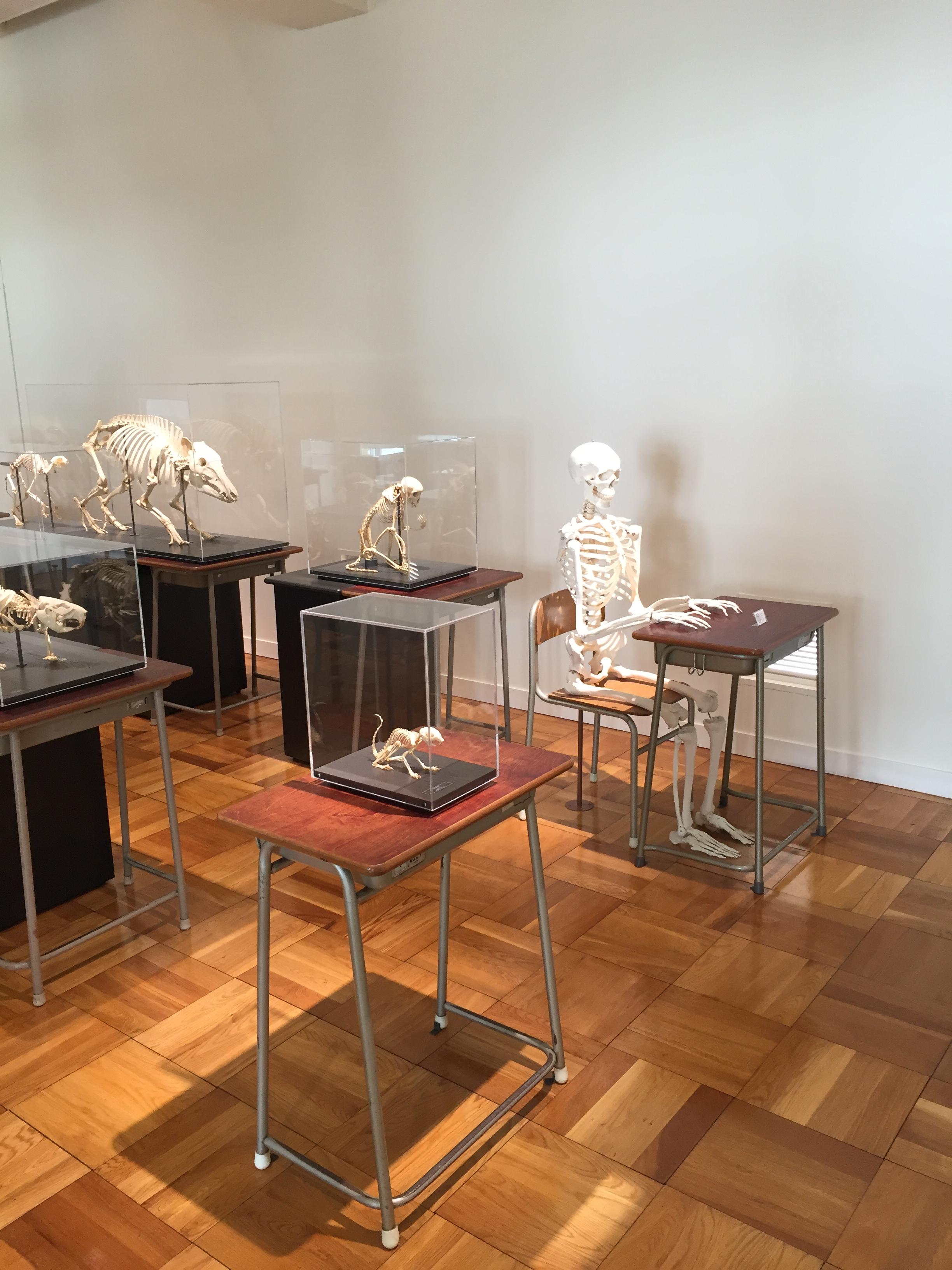 骨の教室の生徒たちの写真