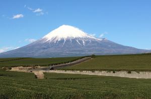 富士山と茶畑の写真