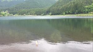 湖を進むソーラー船の写真