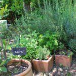 ベニシアさんに倣って!テーマのある庭、ブーケガルニの庭を作る