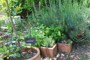 ブーケガルニの庭の写真