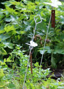セリ科の庭の写真