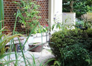 鳥蝶の庭の写真