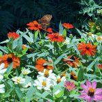 バタフライガーデン:蝶が集まる花を植える