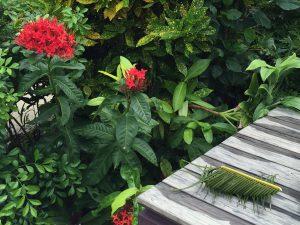 沖縄で作ったソテツの虫かごの写真