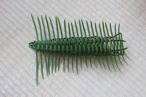 ソテツの虫かご 表の写真