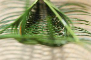 ソテツの虫かごの内側の写真