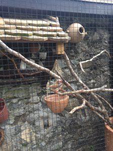 鳥の家の写真