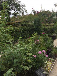 Le jardin de l'odorat(嗅覚の庭) の写真