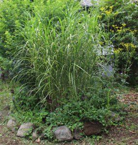 秋の七草の庭の写真