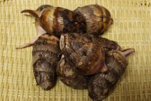 里芋(赤芽)の写真
