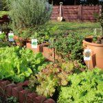 テーマのある庭、サラダバーガーデンを作る