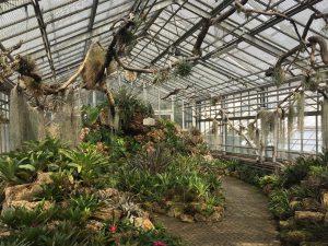 ジュネーブの植物園のエアープランツ