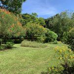 ハワイのフォスター植物園のバタフライガーデン