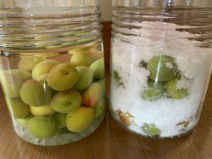 梅酒と梅シロップの写真